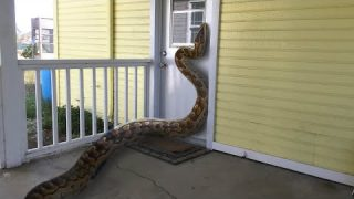 15 Incredible Cases Of Wild Animals Invading People's Homes