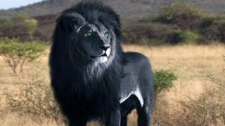 15 Wild Animals That Have Rarely Ever Been Seen #2