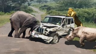 Top 10 attack | Wild animals attack car | The mother eagle catches the baby cheetah for revenge