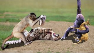 World's Fastest Animals Fail! Leopard, cheetah vs Zebra Baboon Wildebeest –  Wild animals rescue